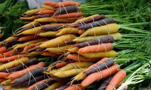 ניקוי רעלים ירקות שורש